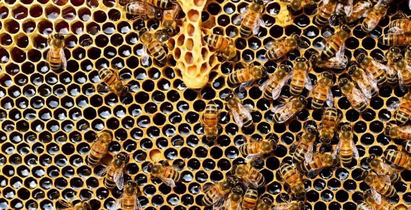 Pourquoi préférer la consommation du miel français ?